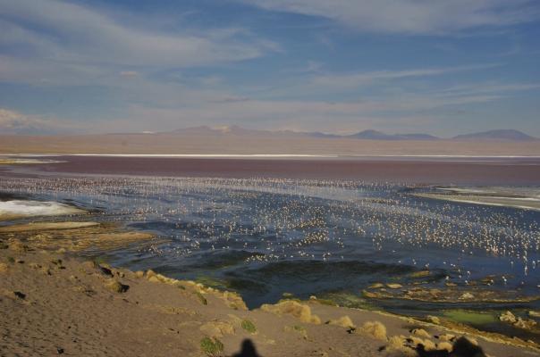 Salar de Uyuni (699)