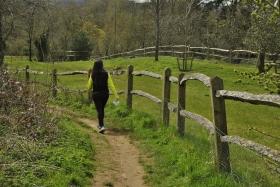 Surrey Hills (119)