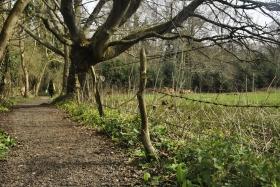 Surrey Hills (58)