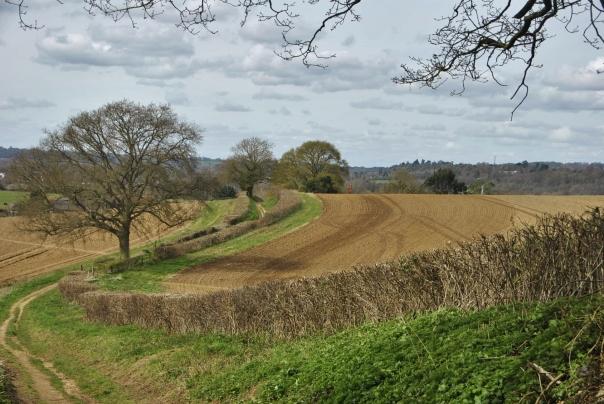 Surrey Hills (83)